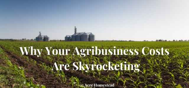 agribusiness featured image