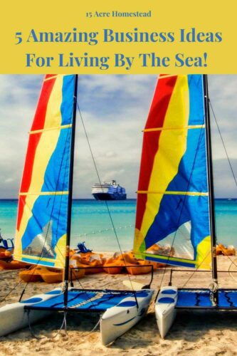 Check out these really cool tips and tricks for business ideas for you to make a profit if you live by the sea.