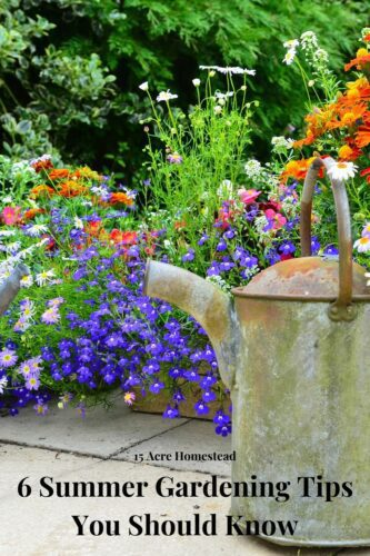 If you are unsure where you should begin with your lawn maintenance this summer season, follow the summer gardening tips mentioned here and grow yourself a garden that will look spectacular in a few upcoming weeks.