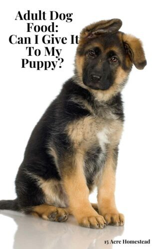 Are you wondering whether a puppy can have adult dog food? This post will clear up some of the questions.