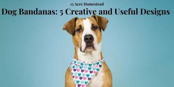 dog bandana featured image