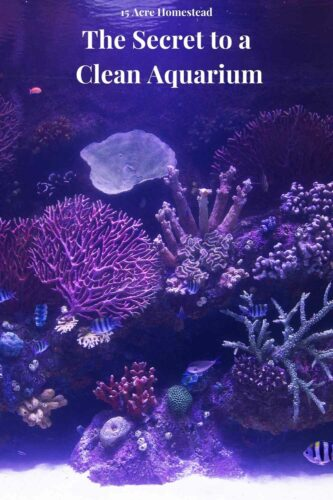Learn how to have a clean aquarium in the post and then enjoy your tank going forward!