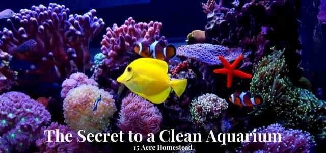 aquarium featured image