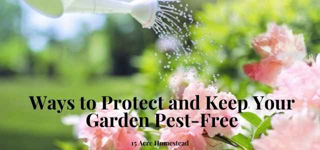 pest-free featured image