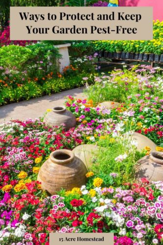 If you have any type of garden on your property you know the struggles of keeping it pest-free. In this post, you can learn some tips on how to do so.
