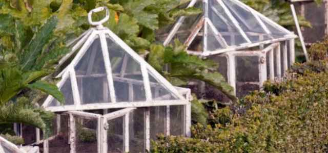 cloches protecting plants