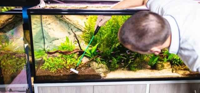 man cleaning an aquarium