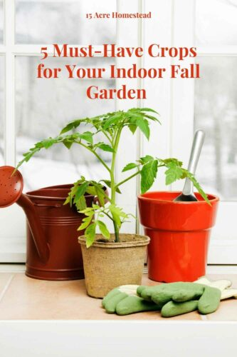 While summer's the ideal time to reap produce from a garden, don't forget you can grow one in fall and winter too! As soon as your tomatoes and zucchini begin to shed their fruit in late summer, it's time to start thinking about starting your indoor fall garden. Here are 5 crops you'll want to be sure to add to your seedling list.