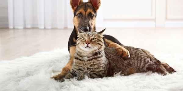 Pets on a carpet