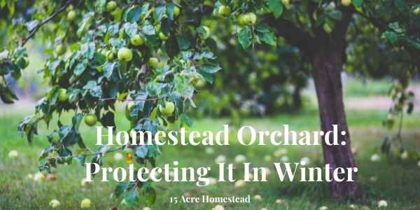 homestead orchard featured image