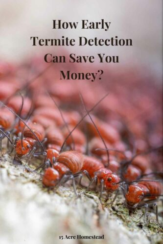 It should be every homeowner's duty to be proactive about detecting and preventing termite damage before it causes you any irreparable damage.