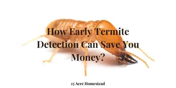 Early detection of termites featured image