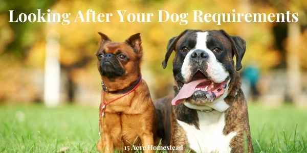 looking after your dog featured image