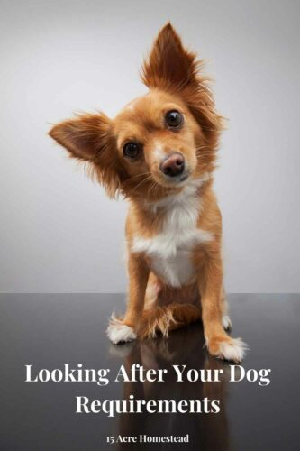 Knowing what is involved when it comes to looking after your dog can make all the difference in the worl to you and your new canine friend.