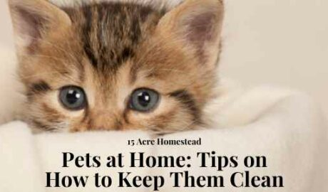 keeping pets clean featured image