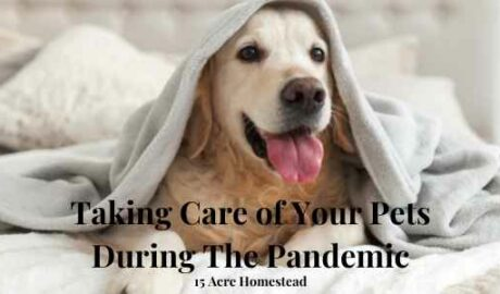 care of your pets featured image