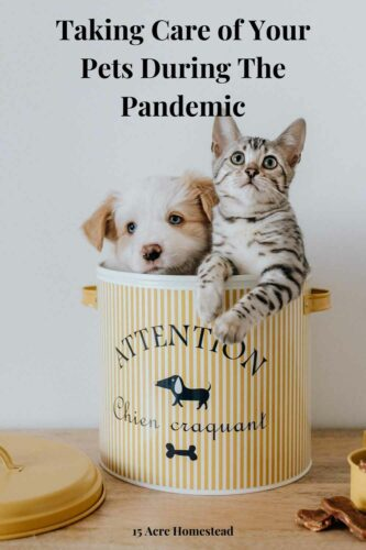 Taking care of your pets is so important, especially during an epidemic. This post can help you when it comes to the care of your pet.