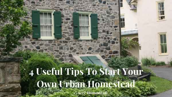 Urban Homestead featured image