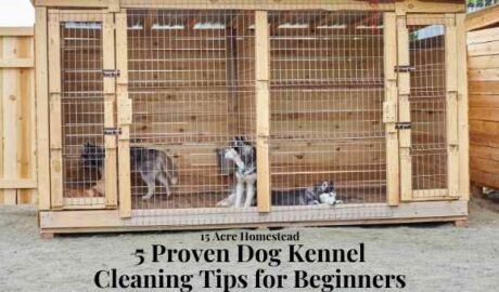 dog kennel cleaning featured image