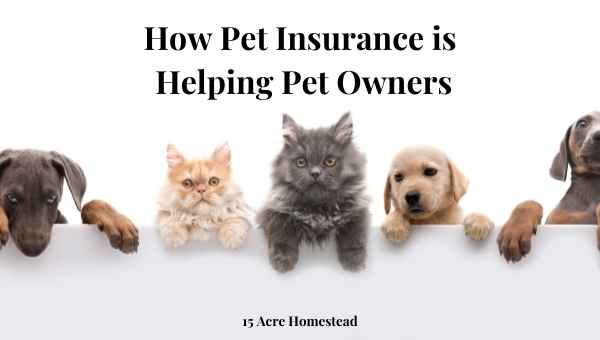 pet insurance featured image