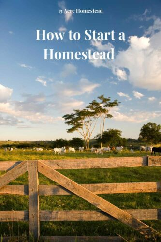Use these simple and quick tips to learn how to start a homestead today.