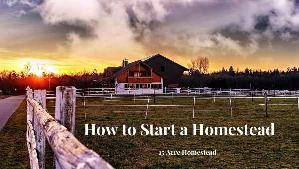 How to Start a Homestead featured image