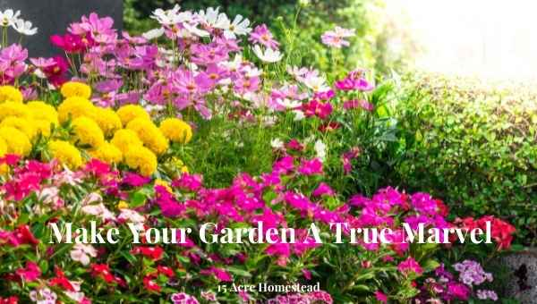 Make your garden a true marvel featured image