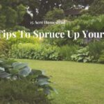 spruce up your yard featured image